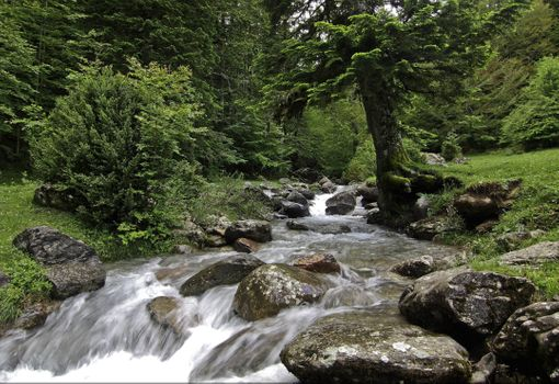 Фото лес, пейзаж, река больших размеров