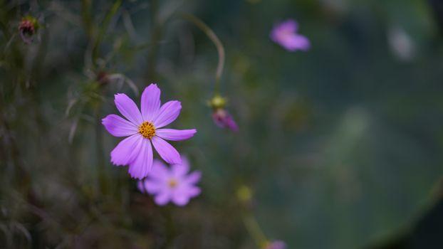 Фото бесплатно фиолетовый космос, лепестки, почки