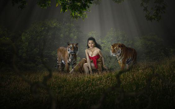 Заставки тигры, хищники, лес