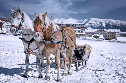 Фото бесплатно животное, лошади, санки