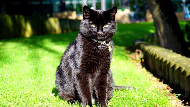 Заставки кот, сидит, трава