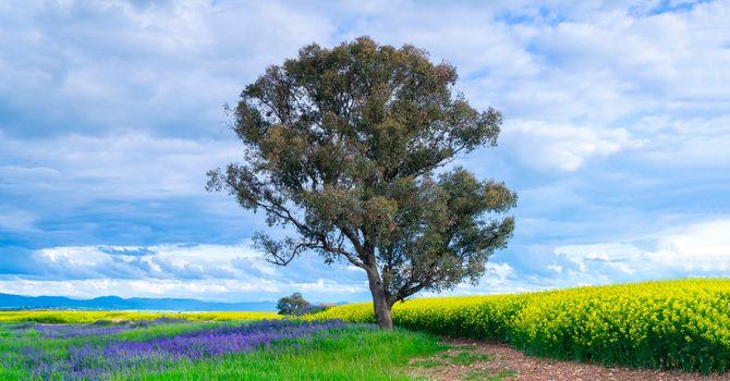 Photo free field, flowers, single tree