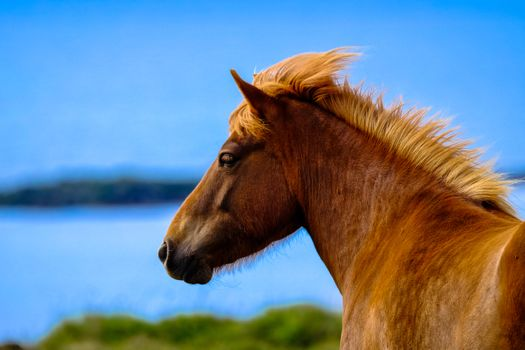 Фото бесплатно лошадь, голова, грива