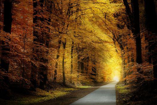 Заставки осень, лес, солнечные лучи