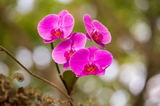 Фото бесплатно фиолетовые орхидеи, размытые, лепестки
