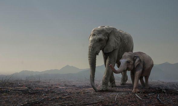 Photo free dawn, elephants, elephant