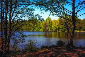 Фото бесплатно лес, берег, пейзаж