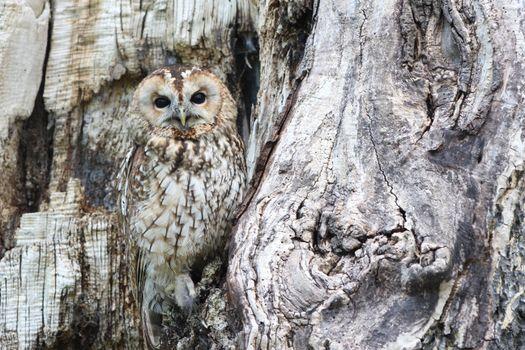 Photo free owl, wild, predator
