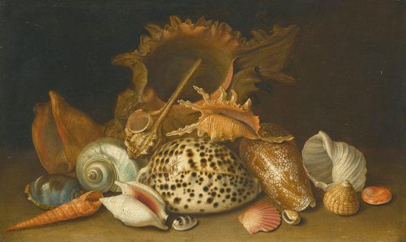 Фото бесплатно натюрморт, ракушки, дары моря