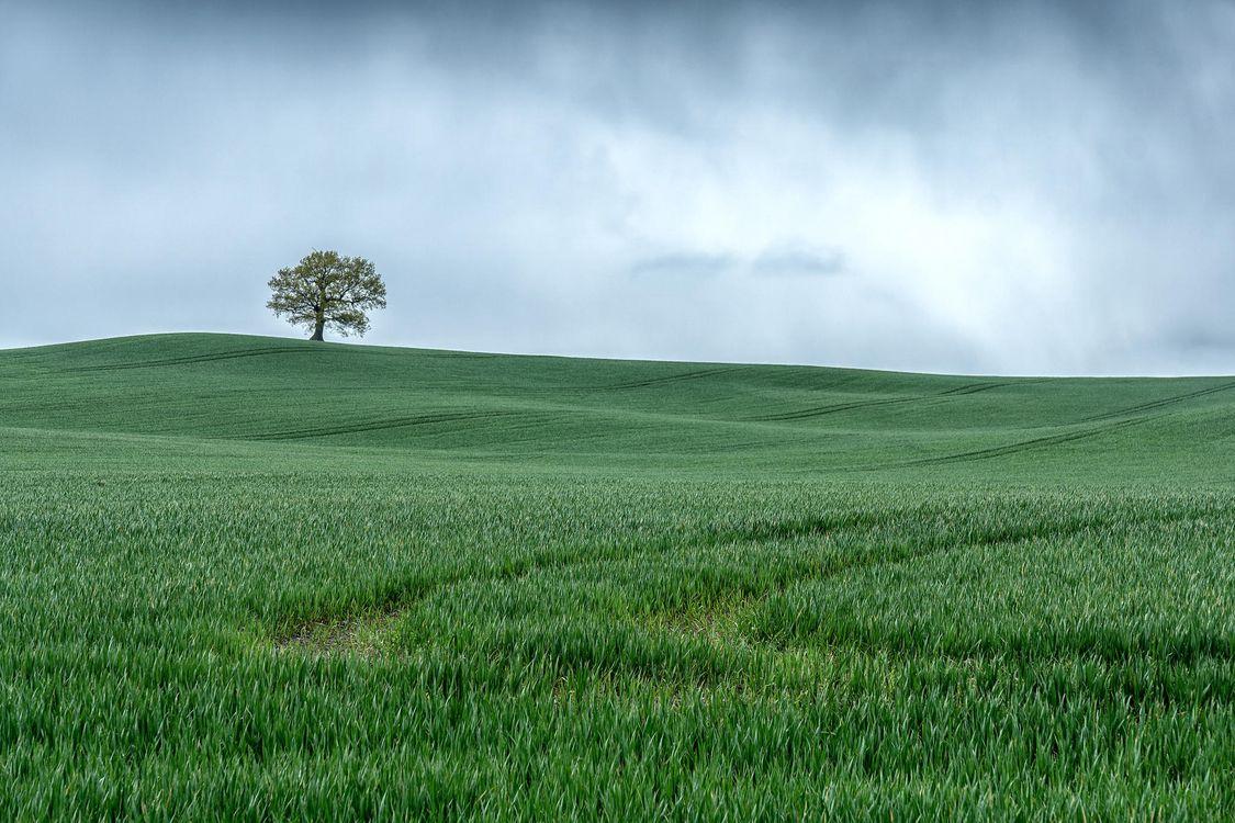 Фото бесплатно поле, холмы, дерево, пейзаж - на рабочий стол