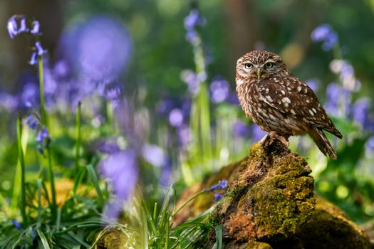 Photo free owl on a stone, grass, flowers