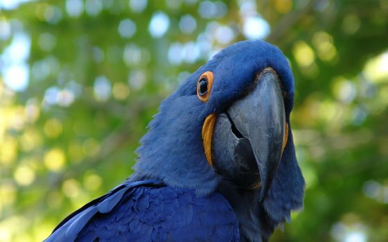 Photo free blue macaw parrot, boke, photography
