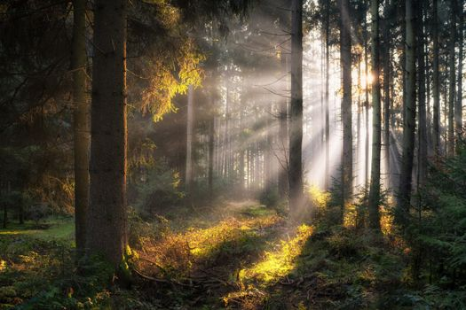 Photo free nature, rays of light, bavaria