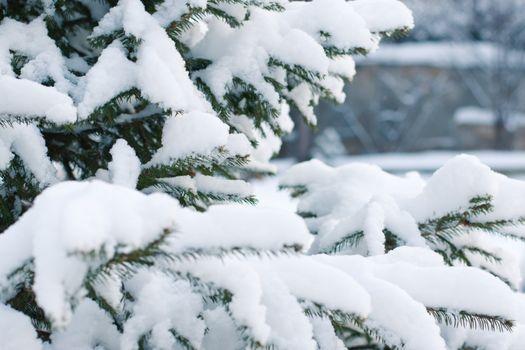 Фото бесплатно рождественская елка, мороз, зимний лес