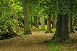 Фото бесплатно природа, пейзажи, экосистема