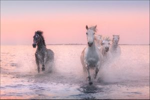 Фото бесплатно закат, лошади, кони