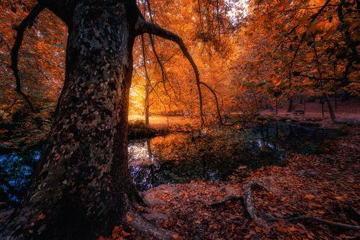 Photo free landscape, bench, autumn leaves