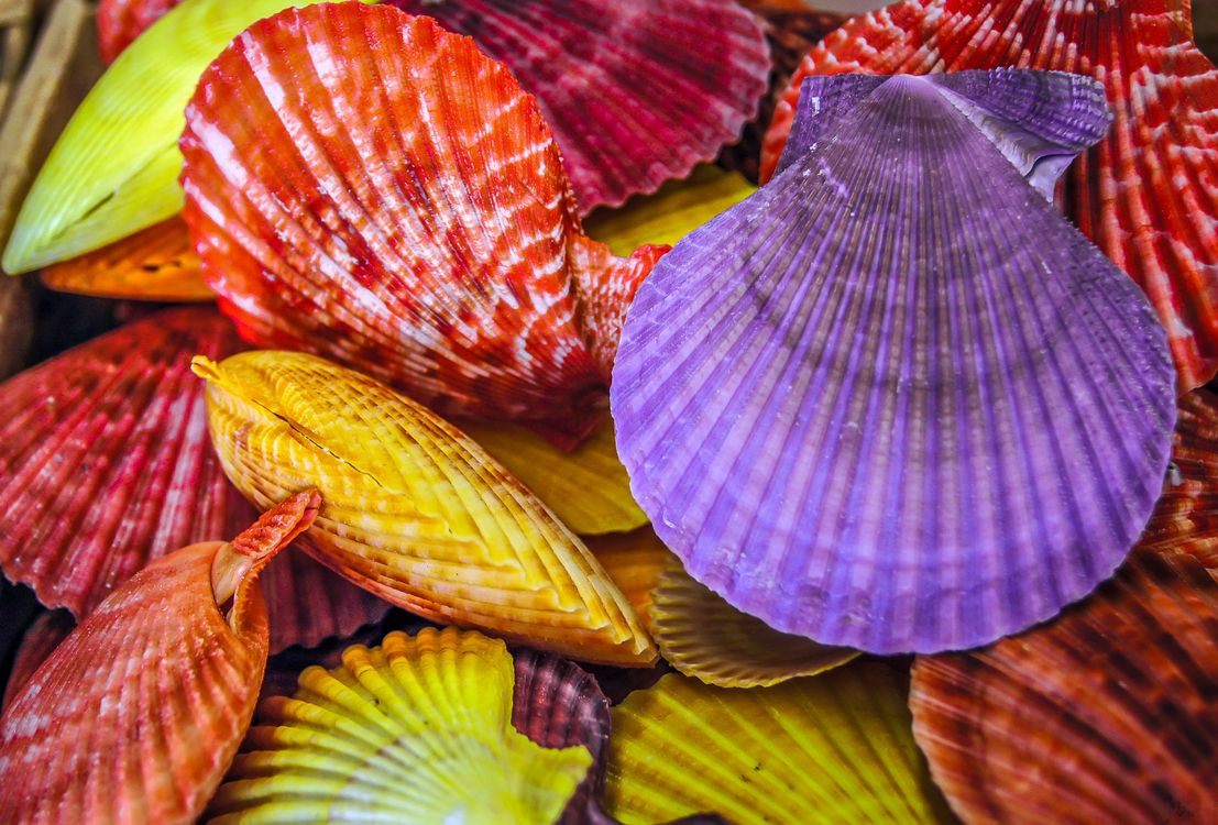 Фото бесплатно ракушки, дары моря, разноцветные - на рабочий стол