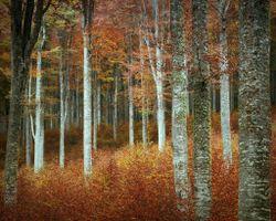 Фото бесплатно солнечный свет, лес, ветвь