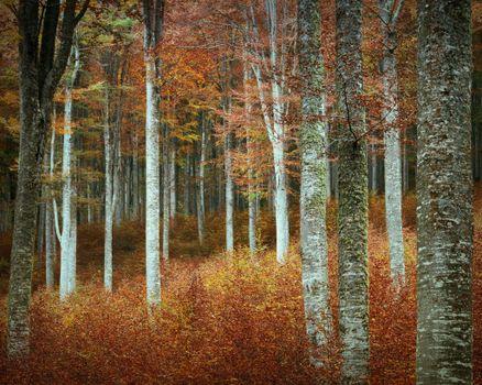 Photo free sun light, forest, branch