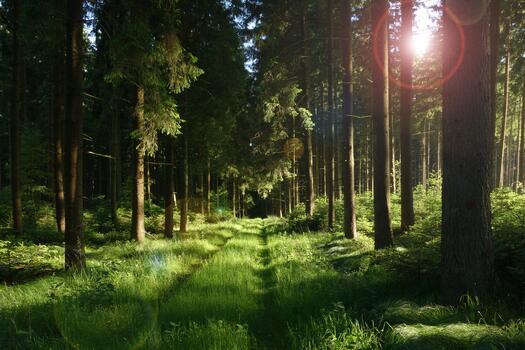 Photo free parks, habitat, woody plant