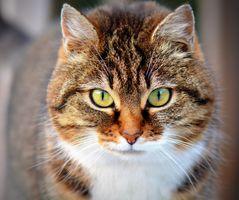Фото бесплатно животное, питомец, кошка