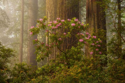 Фото бесплатно кусты, цветы, туман