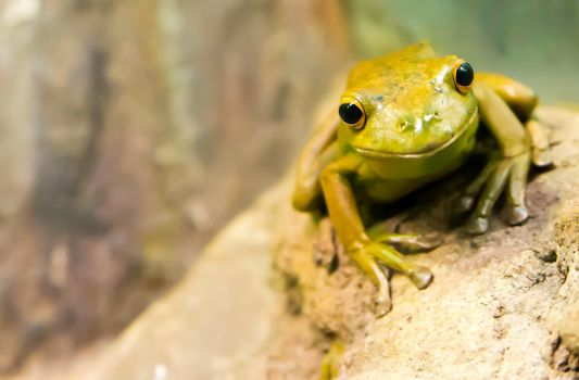 Photo free nature, wildlife, frog