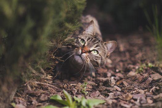 Photo free animal, cat, mustache