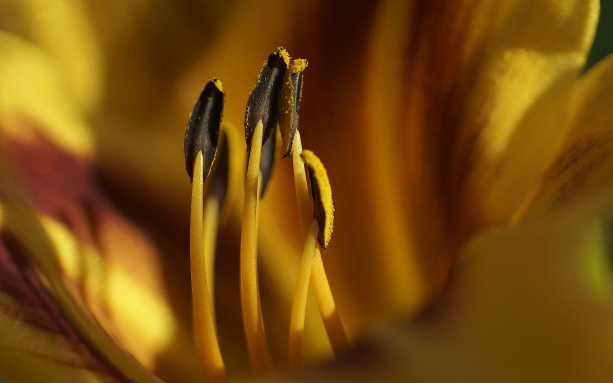 Фото желтый цветы стебель растения - бесплатные картинки на Fonwall