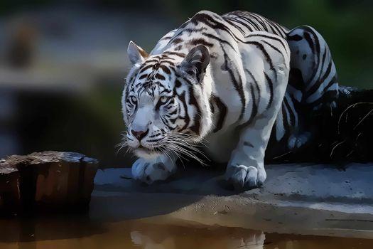 Фото бесплатно хищник, вода, морда