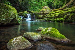 Фото бесплатно West Canungra Creek Circuit, Lamington National Park, Национальный парк Ламингтон