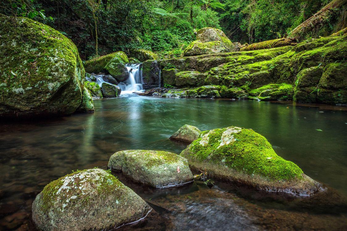 Фото бесплатно West Canungra Creek Circuit, Lamington National Park, Национальный парк Ламингтон - на рабочий стол