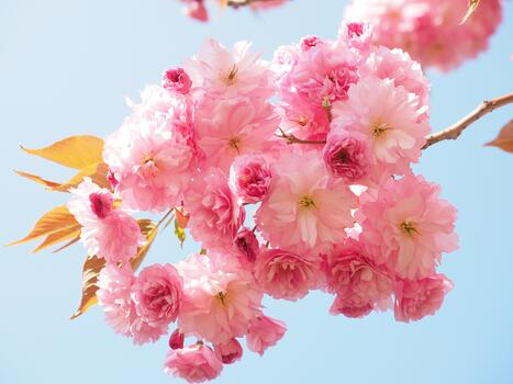 Photo free petal, spring, branch