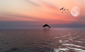 Фото бесплатно Dolphin, пейзаж, Луна
