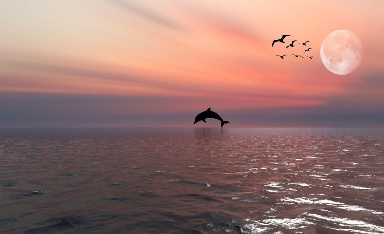 Фото бесплатно Dolphin, пейзаж, Луна - на рабочий стол