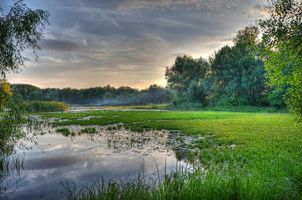 Фото бесплатно заводь, Днепр, Киев, Украина, закат, река, деревья, пейзаж