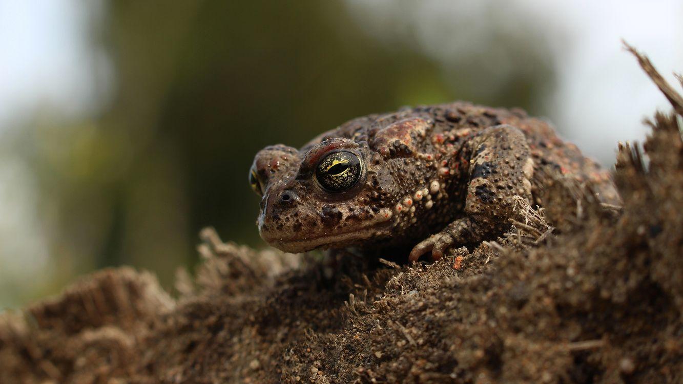Фото рептилия макро фауны - бесплатные картинки на Fonwall