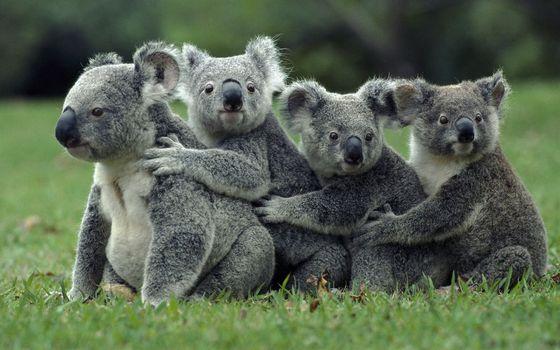 Photo free animals, wildlife, fauna