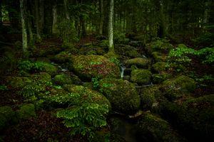 Фото бесплатно камни, Creek, мох