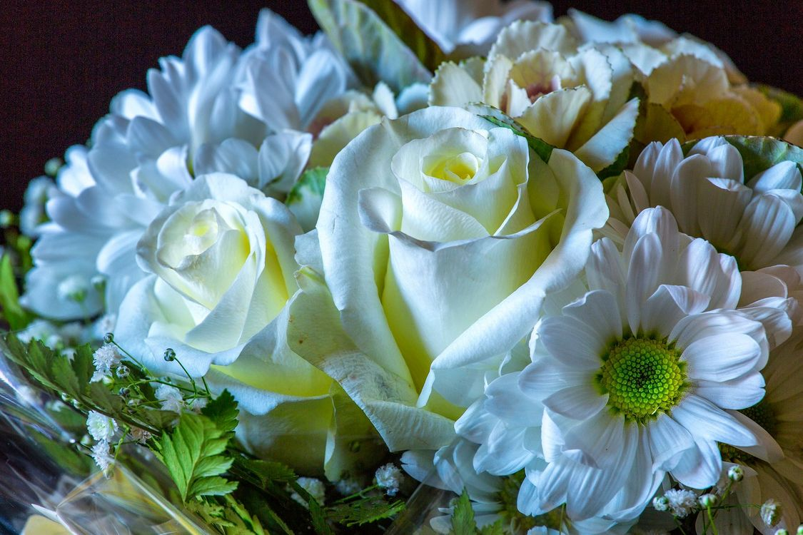 Фото бесплатно розы, цветы, букет, флора, цветы