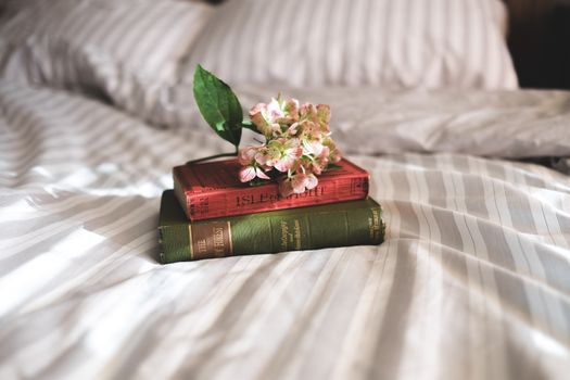 Photo free books, flower, beds