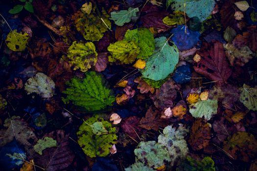 Фото бесплатно сухие листья, осенью, вид сверху
