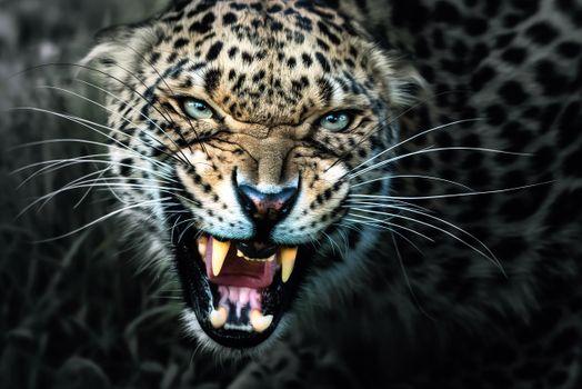 Заставки оскал, ярость, хищник