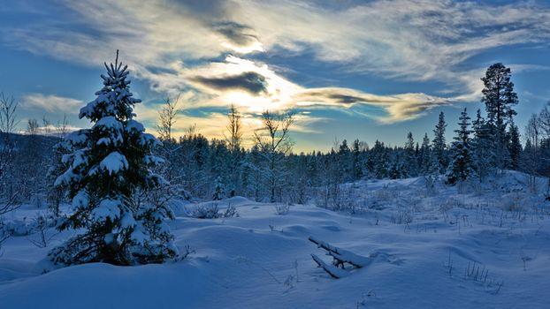 Фото бесплатно зима, облака, деревья