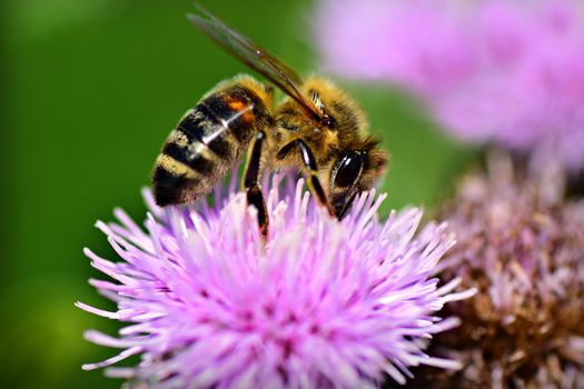 Фото бесплатно животное, насекомые, макросъемка