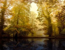 Бесплатные фото осень,лес,деревья,туман,природа,пейзаж