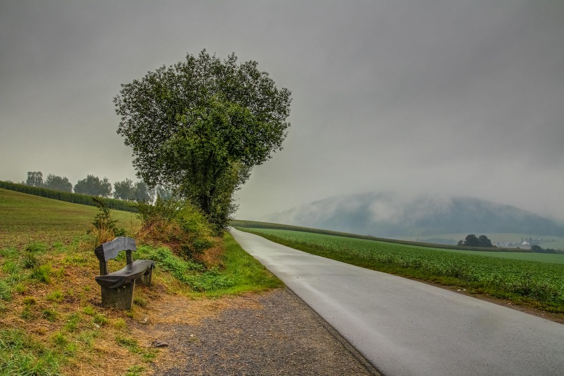 Фото бесплатно поле, дорога, деревья, тучи, пейзаж, пейзажи