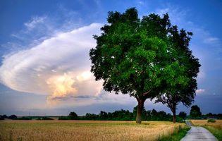 Бесплатные фото закат, поле, колосья, деревья, пейзаж