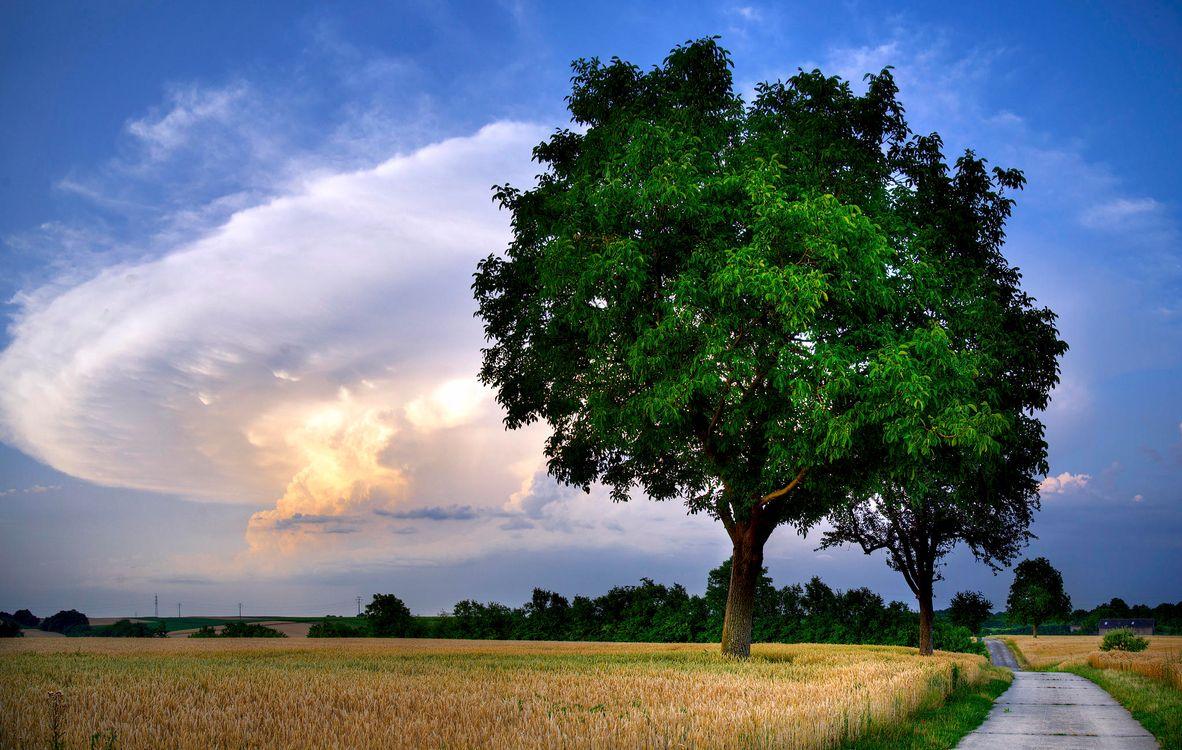 Фото бесплатно закат, поле, колосья, деревья, пейзаж, пейзажи